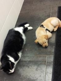 Baldur and George get along surprisingly well